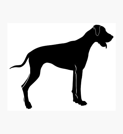 American foxhound silhouette Photographic Print