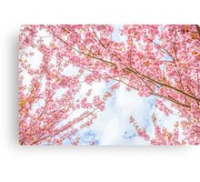 The blossom trees Canvas Print