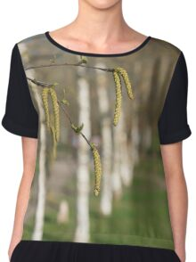 spring birches with catkins and green leaves  Chiffon Top