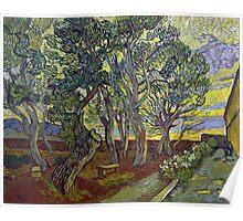 Vincent van Gogh The Garden of Saint Paul's Hospital Poster