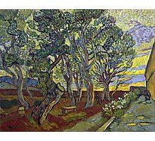 Vincent van Gogh The Garden of Saint Paul's Hospital Photographic Print