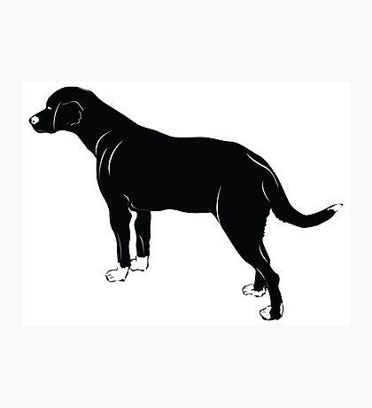 American foxhound dog Photographic Print