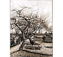 Vincent van Gogh The Parsonage Garden at Nuenen in Winter Photographic Print