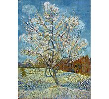 Vincent van Gogh The Pink Peach Tree Photographic Print