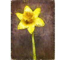 Daffodil Pencil Photographic Print