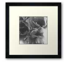Flowers big in black and white Framed Print