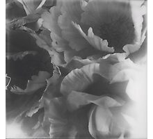 Flowers big in black and white Photographic Print