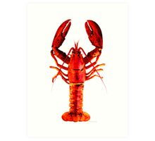 Red Lobster - Full Body Seafood Art Art Print