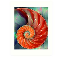 Nautilus Shell - Sea Shells Art Print