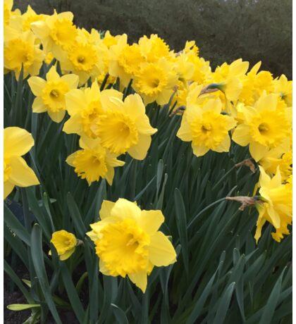 Flower Yellow like the Sun Sticker