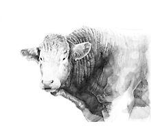 Cow Illustration 01 Photographic Print