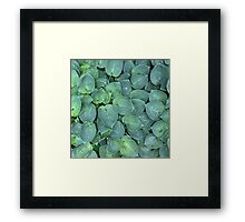 Hosta Patch Framed Print