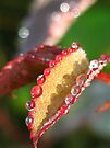 jewelled leaves  by millymuso
