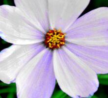 lavender daisy  Sticker