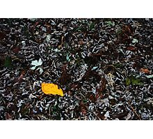 The Yellow Leaf Photographic Print