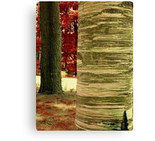2_Tree, or Red in the back  Canvas Print