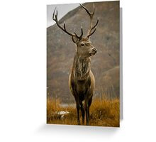 Monarch of the Glen Greeting Card