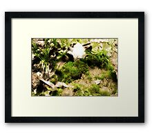 Venerable Earth Framed Print