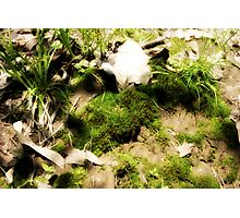 Venerable Earth Photographic Print