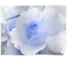 Spring Time with Blue Rose Poster