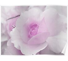 Spring Time with Lavender Rose Poster
