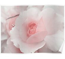 Spring Time with Pink Rose Poster