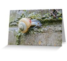 On the Garden Wall Greeting Card