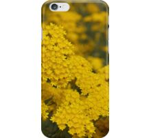 Rhodanthe iPhone Case/Skin