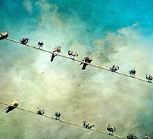 Birds on a High Wire by Scott Mitchell