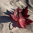 Deep Red Maple Leaf by Georgia Mizuleva