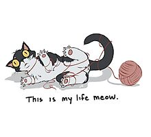 This is My Life Meow. Photographic Print