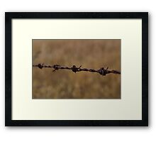 Barbed Wire in Decay Framed Print
