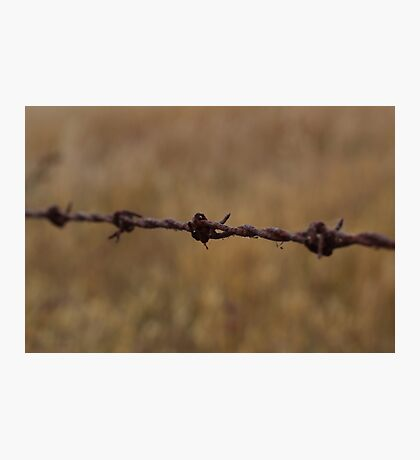 Barbed Wire in Decay Photographic Print
