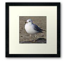 Sea Gull on English Beach, Vancouver, Canada  Framed Print