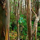 yellow gums (Tasmania) by Janine Paris