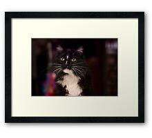 Jasper is 7 Framed Print