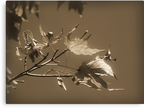 Autumn Leaves ~ In Sepia by Lucinda Walter