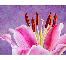 Stamen dance Photographic Print