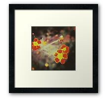 confused little red flowers Framed Print