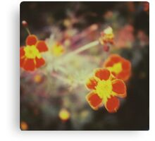 confused little red flowers Canvas Print