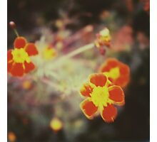 confused little red flowers Photographic Print