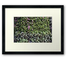 Green wall with pink flowers. Framed Print