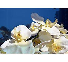 White plastic flowers. Photographic Print