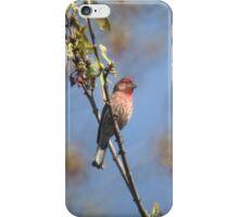 A bird on a branch iPhone Case/Skin