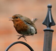 Robin Hopping Mad by AnnDixon