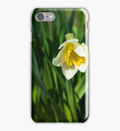 Blooming narcissus in garden at the springtime iPhone Case/Skin