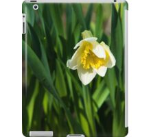 Blooming narcissus in garden at the springtime iPad Case/Skin