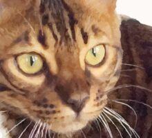 Boris the cat - Boris le chat Sticker