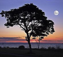 By The Light Of The Silvery Moon by Barbny