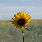 Sunflower by Tim Bates